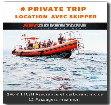 http://sea-adventure.net/wp-content/uploads/2018/01/private-trip.png