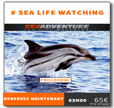 http://sea-adventure.net/wp-content/uploads/2018/01/reservation-sea-life-watching.png