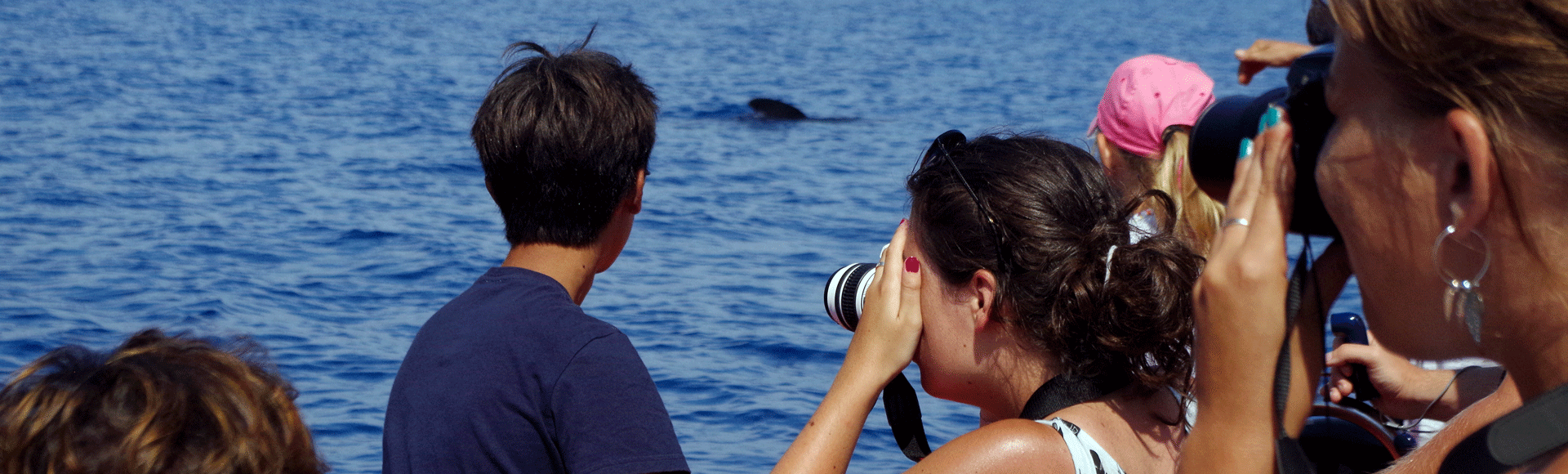 Whale watching 17 july 1h45 pm /// Porquerolles Discovery Friday 19 july  day trip