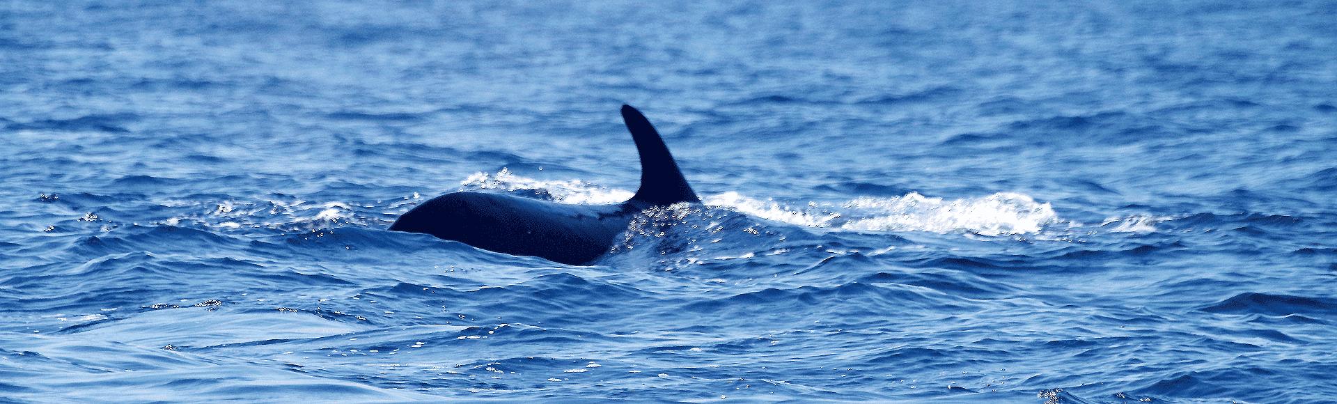 rencontrer-les-baleines