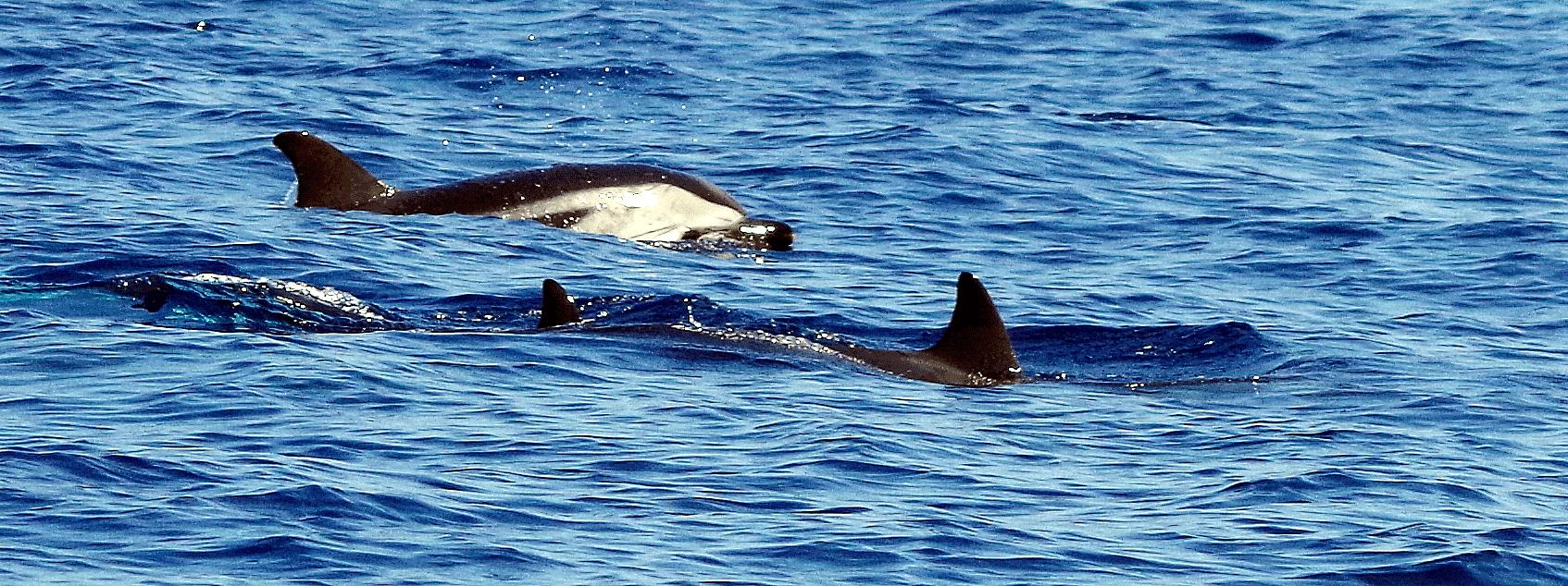 rencontrez-les-dauphins
