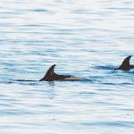 sortie-dauphins-toulon-web