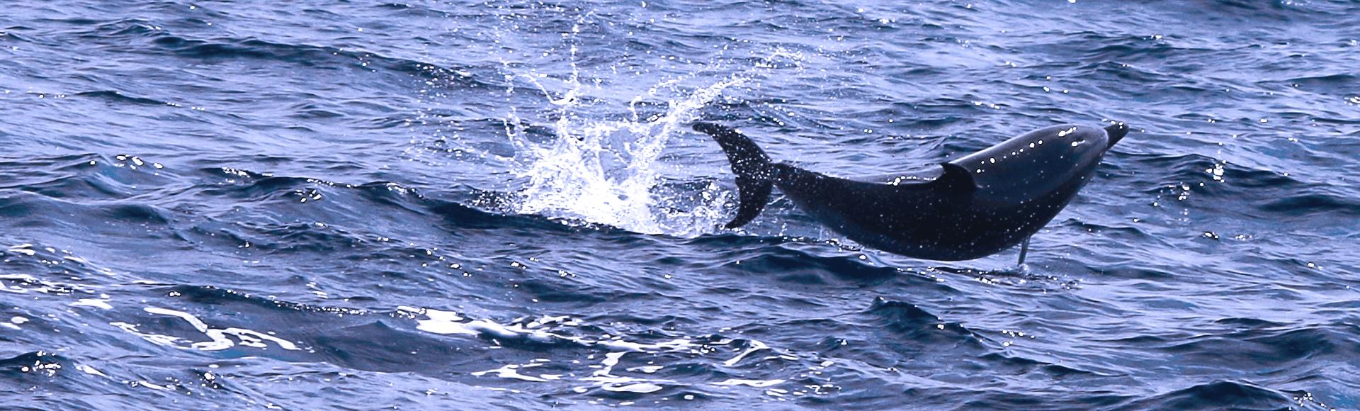 sortie-dauphin