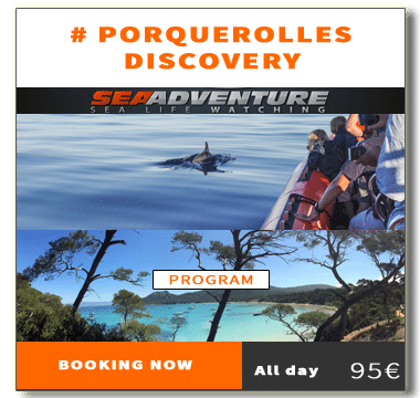 https://sea-adventure.net/wp-content/uploads/2018/01/reservation-porquerolles-discovery-en.png