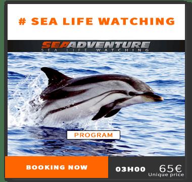 https://sea-adventure.net/wp-content/uploads/2018/01/reservation-sea-life-watching-en.png/