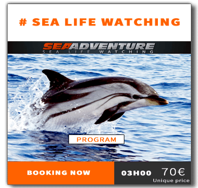 https://sea-adventure.net/wp-content/uploads/2018/12/reservation-sea-life-watching-eng.png/