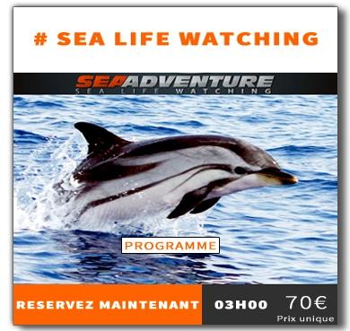 https://sea-adventure.net/wp-content/uploads/2018/12/reservation-sea-life-watching-fr.jpg