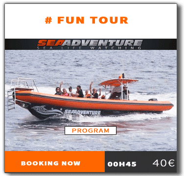 https://sea-adventure.net/wp-content/uploads/2018/01/reservation-fun-tour-en.png