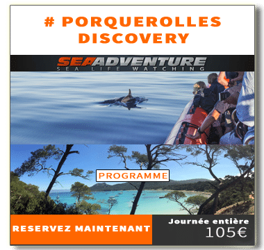 https://sea-adventure.net/wp-content/uploads/2020/02/reservation-porquerolles-discovery-2020.png